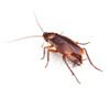 kakkerlakken ongediertebestrijding